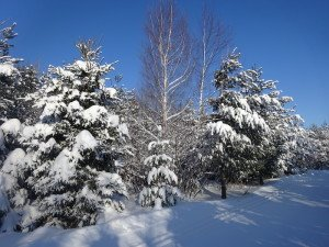 -2020-01-14 Canada Chicoutimi Parc de la rivière du Moulin DSC02662