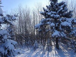 -2020-01-14 Canada Chicoutimi Parc de la rivière du Moulin DSC02664