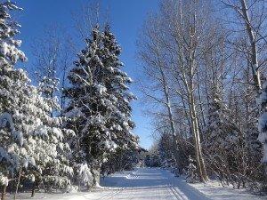 -2020-01-14 Canada Chicoutimi Parc de la rivière du Moulin DSC02667