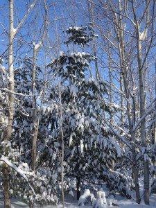 -2020-01-14 Canada Chicoutimi Parc de la rivière du Moulin DSC02675