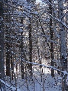 -2020-01-14 Canada Chicoutimi Parc de la rivière du Moulin DSC02683