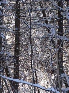 -2020-01-14 Canada Chicoutimi Parc de la rivière du Moulin DSC02684