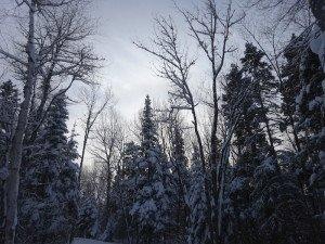 -2020-01-14 Canada Chicoutimi Parc de la rivière du Moulin DSC02702