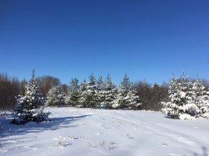 IMG_3301 2020-01-14 Canada Chicoutimi Parc de la rivière du Moulin