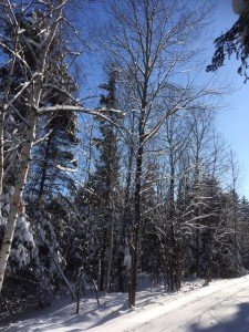 IMG_3302 2020-01-14 Canada Chicoutimi Parc de la rivière du Moulin