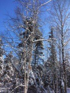 IMG_3303 2020-01-14 Canada Chicoutimi Parc de la rivière du Moulin