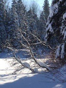 IMG_3315 2020-01-14 Canada Chicoutimi Parc de la rivière du Moulin