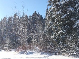 IMG_3317 2020-01-14 Canada Chicoutimi Parc de la rivière du Moulin