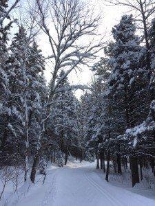 IMG_3321 2020-01-14 Canada Chicoutimi Parc de la rivière du Moulin