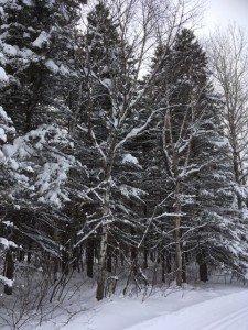 IMG_3333 2020-01-14 Canada Chicoutimi Parc de la rivière du Moulin