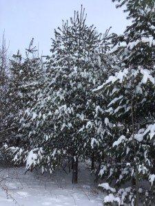 IMG_3338 2020-01-14 Canada Chicoutimi Parc de la rivière du Moulin