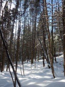 P1070688 2020-01-05 Canada Ste Brigitte de Laval - Sentier du montagnard