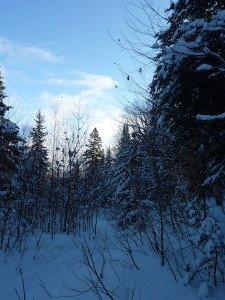 P1070707 2020-01-05 Canada Ste Brigitte de Laval - Sentier du montagnard