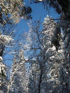 P1070733 2020-01-05 Canada Ste Brigitte de Laval - Sentier du montagnard Arbre rouge