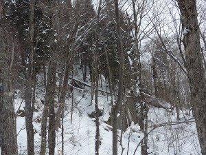 P1070748 2020-01-06 Canada Ste Brigitte de Laval - Sentier de la montagne à 2 têtes