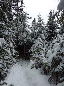 P1070758 2020-01-06 Canada Ste Brigitte de Laval - Sentier de la montagne à 2 têtes