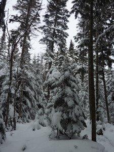 P1070768 2020-01-06 Canada Ste Brigitte de Laval - Sentier de la montagne à 2 têtes