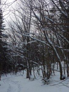 P1070782 2020-01-06 Canada Ste Brigitte de Laval - Sentier de la montagne à 2 têtes