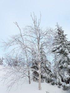 P1070971 2020-01-11 Canada Chibougamau Mont Juggler
