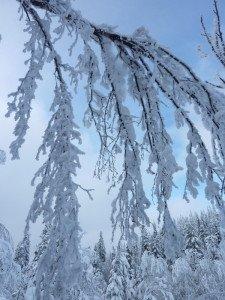 P1070986 2020-01-11 Canada Chibougamau Mont Juggler