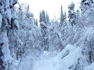 P1080003 2020-01-11 Canada Chibougamau Mont Juggler