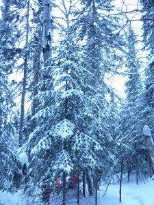 P1080011 2020-01-11 Canada Chibougamau Mont Juggler